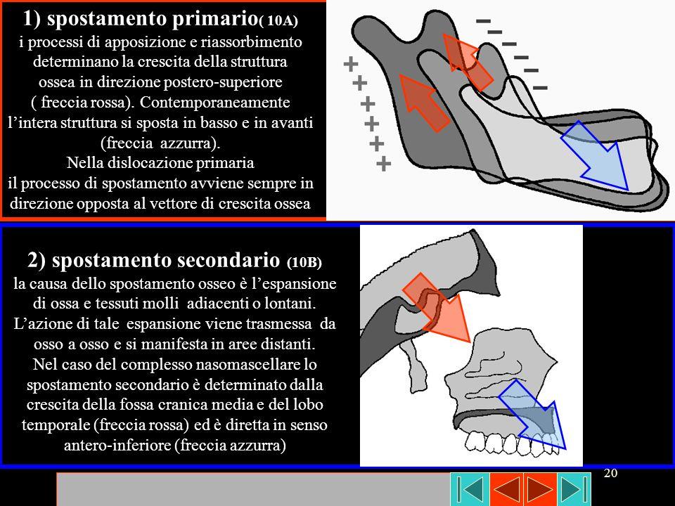 20 1) spostamento primario ( 10A) i processi di apposizione e riassorbimento determinano la crescita della struttura ossea in direzione postero-superi