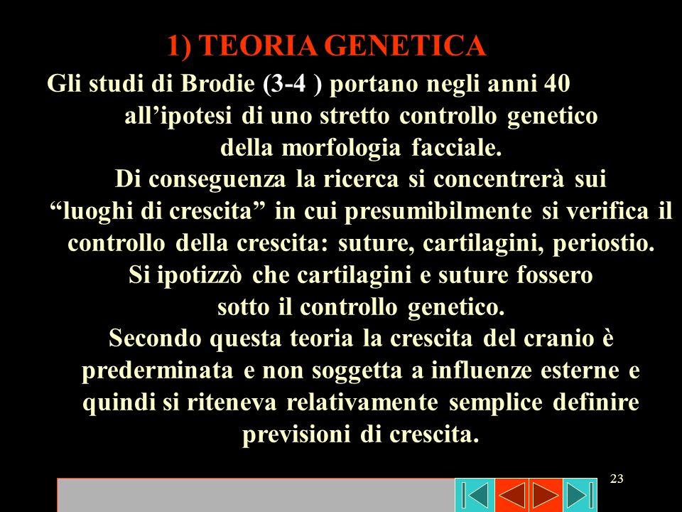 23 1) TEORIA GENETICA Gli studi di Brodie (3-4 ) portano negli anni 40 allipotesi di uno stretto controllo genetico della morfologia facciale. Di cons
