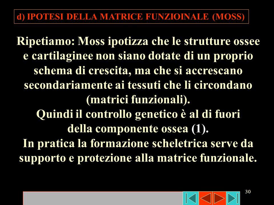 30 d) IPOTESI DELLA MATRICE FUNZIOINALE (MOSS) Ripetiamo: Moss ipotizza che le strutture ossee e cartilaginee non siano dotate di un proprio schema di