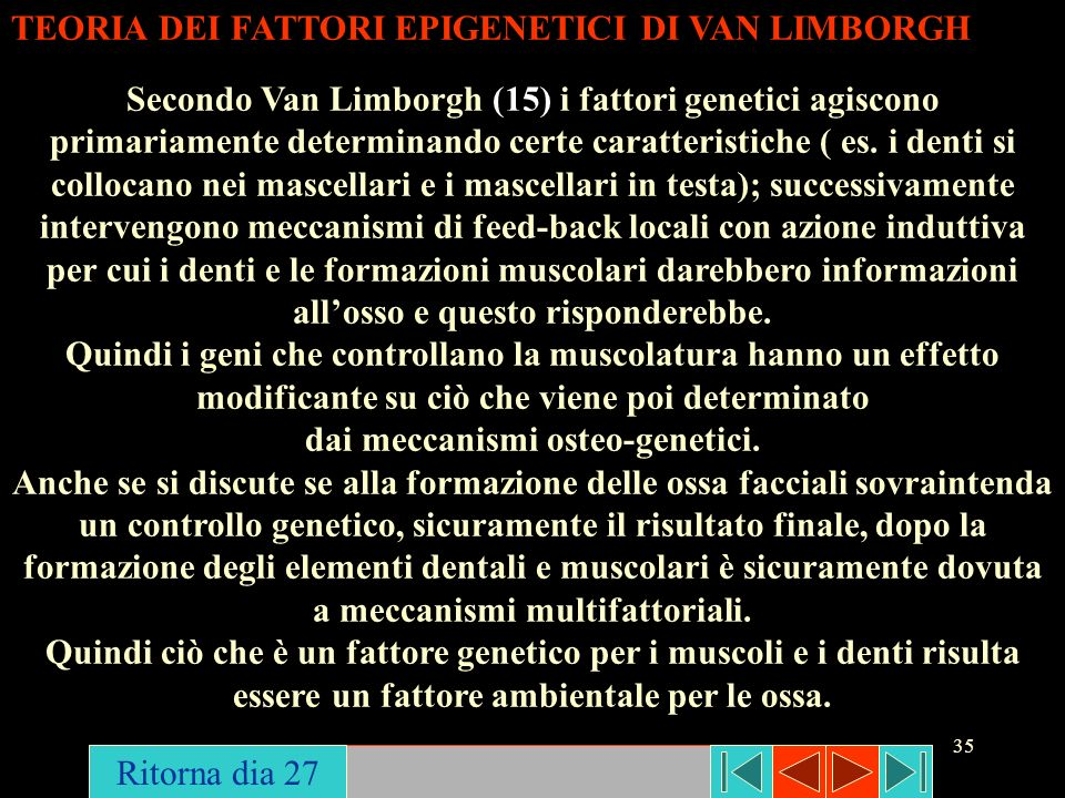 35 TEORIA DEI FATTORI EPIGENETICI DI VAN LIMBORGH Secondo Van Limborgh (15) i fattori genetici agiscono primariamente determinando certe caratteristic