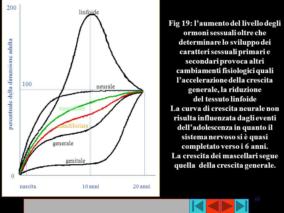 46 nascita 10 anni 20 anni linfoide neurale mascellare mandibolare generale genitale percentuale della dimensione adulta 200 0 100 Fig 19: laumento de