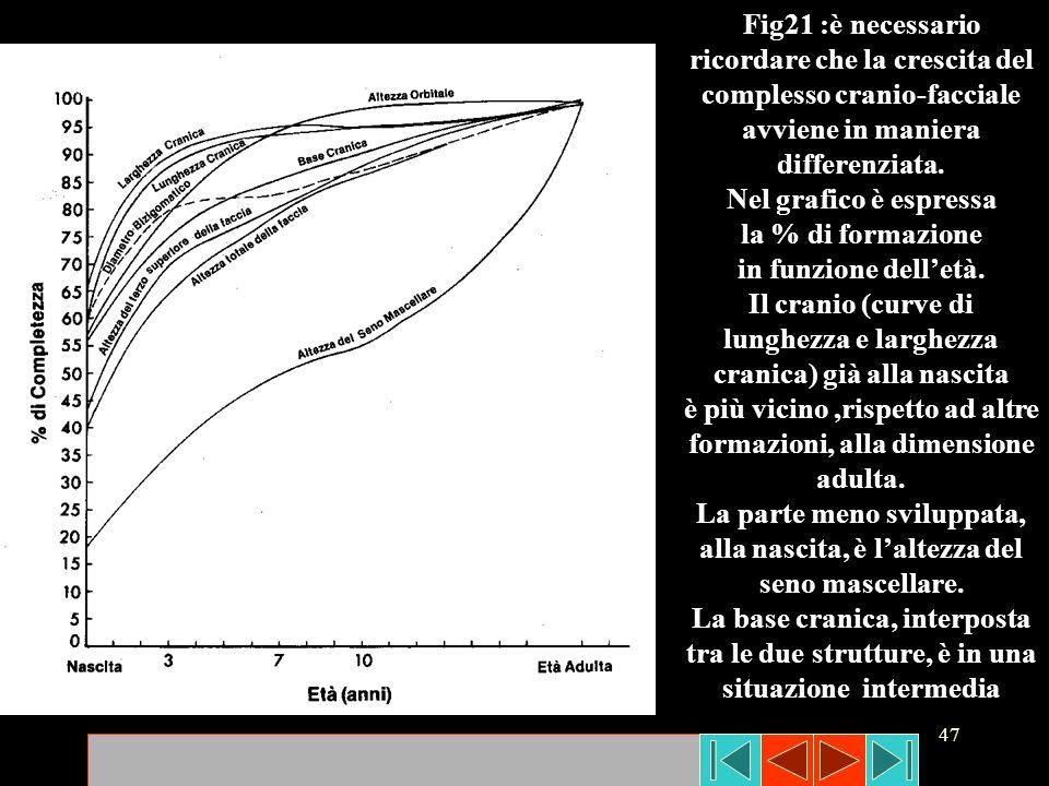 47 Fig21 :è necessario ricordare che la crescita del complesso cranio-facciale avviene in maniera differenziata. Nel grafico è espressa la % di formaz