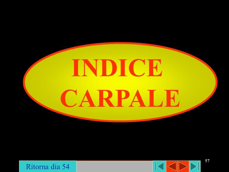 57 INDICE CARPALE Ritorna dia 54