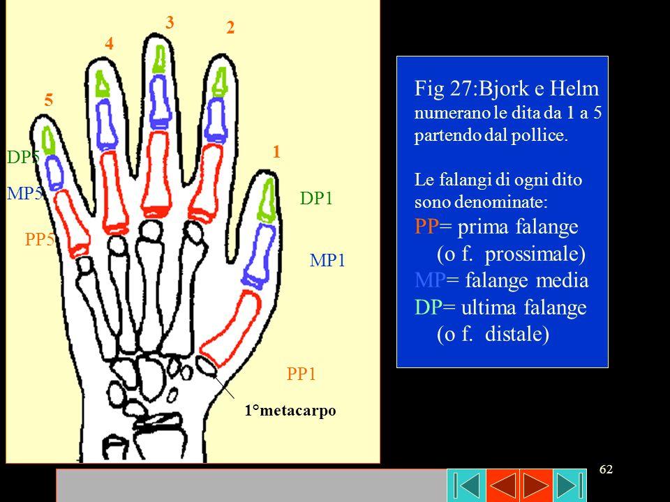 62 1 2 3 4 5 PP1 MP1 DP1 DP5 MP5 PP5 1°metacarpo Fig 27:Bjork e Helm numerano le dita da 1 a 5 partendo dal pollice. Le falangi di ogni dito sono deno