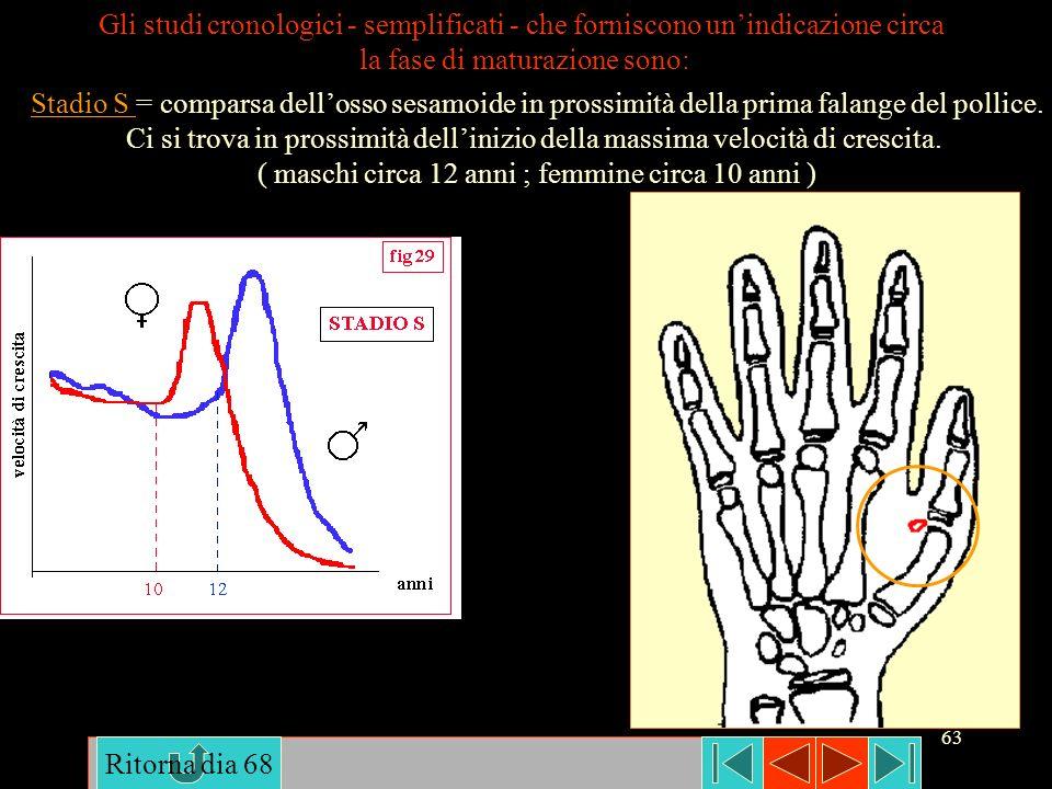 63 Gli studi cronologici - semplificati - che forniscono unindicazione circa la fase di maturazione sono: Stadio S = comparsa dellosso sesamoide in pr