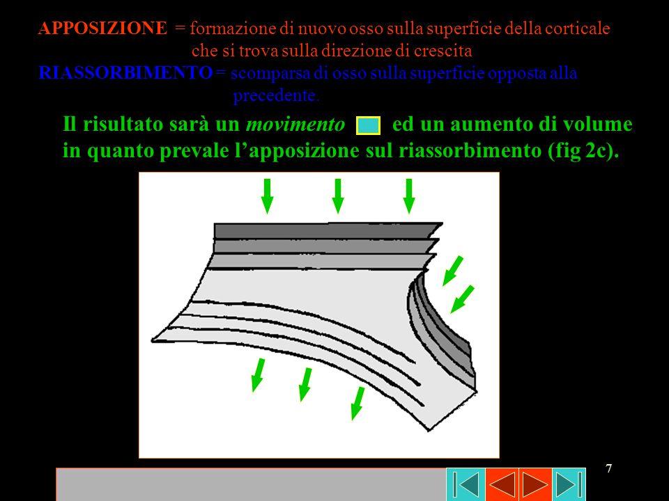 7 APPOSIZIONE = formazione di nuovo osso sulla superficie della corticale che si trova sulla direzione di crescita RIASSORBIMENTO = scomparsa di osso