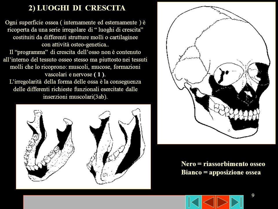 9 Nero = riassorbimento osseo Bianco = apposizione ossea Ogni superficie ossea ( internamente ed esternamente ) è ricoperta da una serie irregolare di