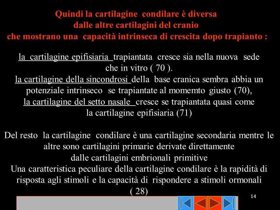 14 Quindi la cartilagine condilare è diversa dalle altre cartilagini del cranio che mostrano una capacità intrinseca di crescita dopo trapianto : la c