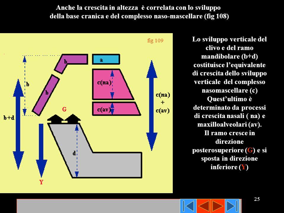 25 fig 109 Anche la crescita in altezza è correlata con lo sviluppo della base cranica e del complesso naso-mascellare (fig 108) Lo sviluppo verticale