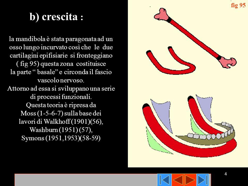 4 fig 95 la mandibola è stata paragonata ad un osso lungo incurvato così che le due cartilagini epifisiarie si fronteggiano ( fig 95) questa zona cost