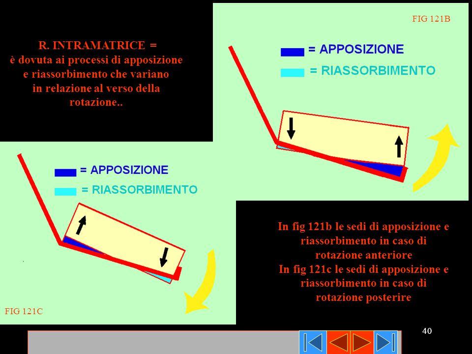 40 R. INTRAMATRICE = è dovuta ai processi di apposizione e riassorbimento che variano in relazione al verso della rotazione.. In fig 121b le sedi di a