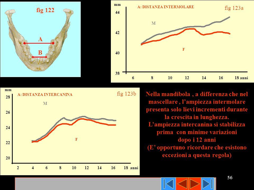 56 A B fig 122 6 8 10 12 14 16 18 anni 44 42 40 38 mm A: DISTANZA INTERMOLARE M F fig 123a Nella mandibola, a differenza che nel mascellare, lampiezza