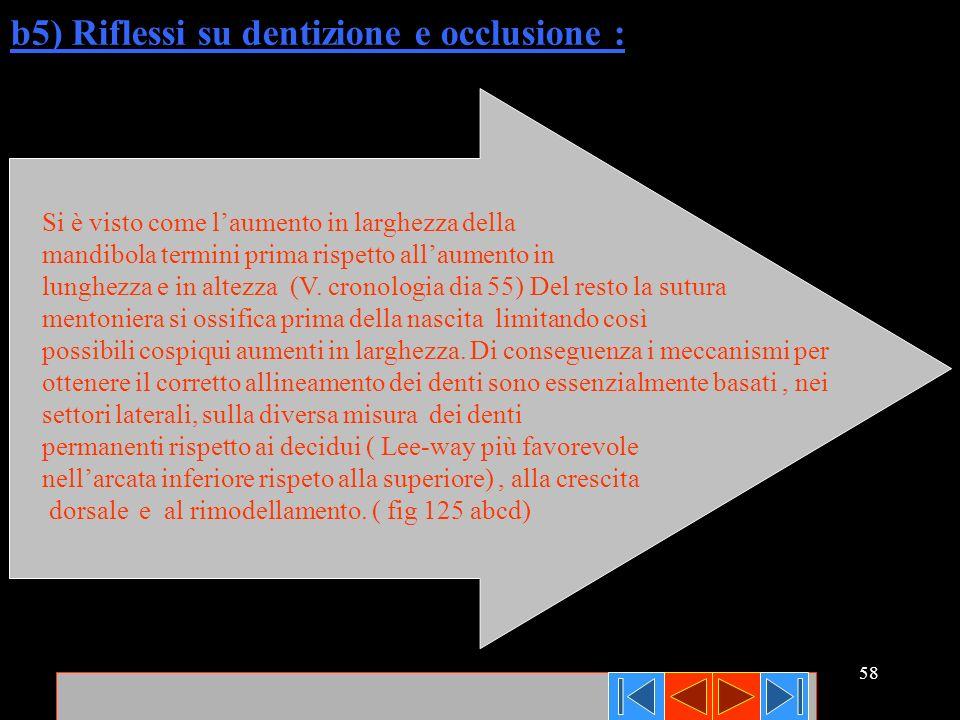 58 b5) Riflessi su dentizione e occlusione : Si è visto come laumento in larghezza della mandibola termini prima rispetto allaumento in lunghezza e in