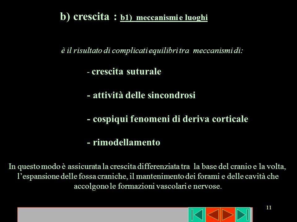 11 b) crescita : b1) meccanismi e luoghi è il risultato di complicati equilibri tra meccanismi di: - crescita suturale - attività delle sincondrosi -