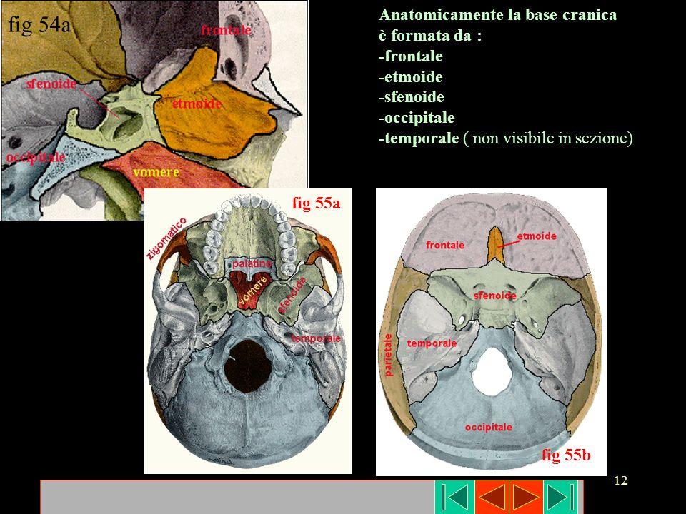 12 fig 54a Anatomicamente la base cranica è formata da : -frontale -etmoide -sfenoide -occipitale -temporale ( non visibile in sezione) fig 55a fig 55