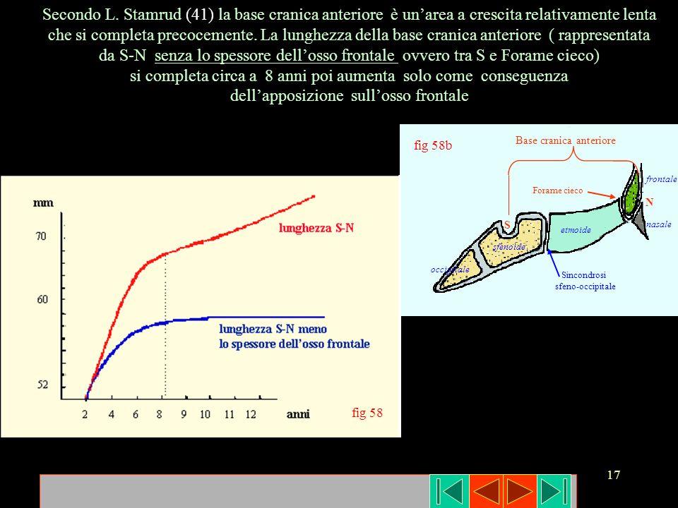 17 etmoide nasale frontale sfenoide occipitale Sincondrosi sfeno-occipitale fig 58b Base cranica anteriore Secondo L. Stamrud (41) la base cranica ant