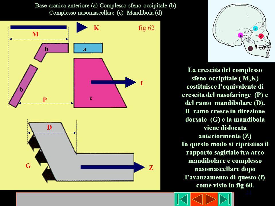 21 fig 62 ab b c M K G D P f Z Base cranica anteriore (a) Complesso sfeno-occipitale (b) Complesso nasomascellare (c) Mandibola (d) a bc d La crescita