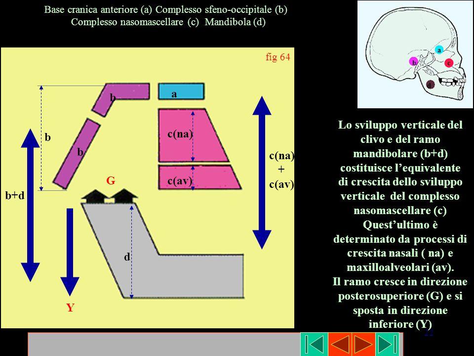 22 fig 64 G Y c(na) c(av) c(na) + c(av) a b+d d b b b Base cranica anteriore (a) Complesso sfeno-occipitale (b) Complesso nasomascellare (c) Mandibola
