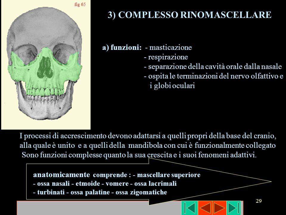 29 fig 65 3) COMPLESSO RINOMASCELLARE a) funzioni: - masticazione - respirazione - separazione della cavità orale dalla nasale - ospita le terminazion