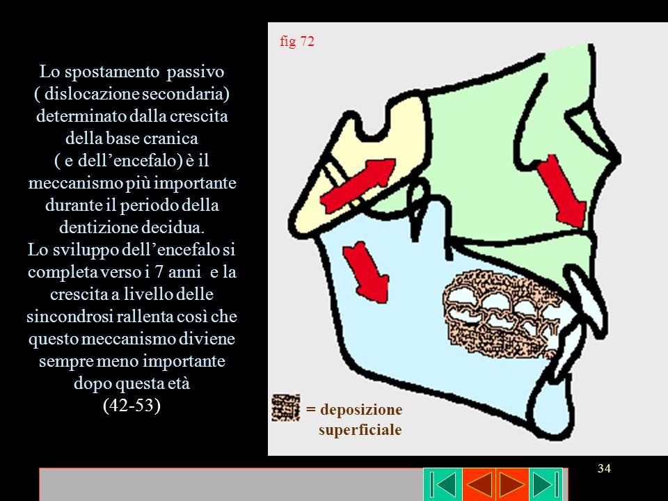 34 Lo spostamento passivo ( dislocazione secondaria) determinato dalla crescita della base cranica ( e dellencefalo) è il meccanismo più importante du