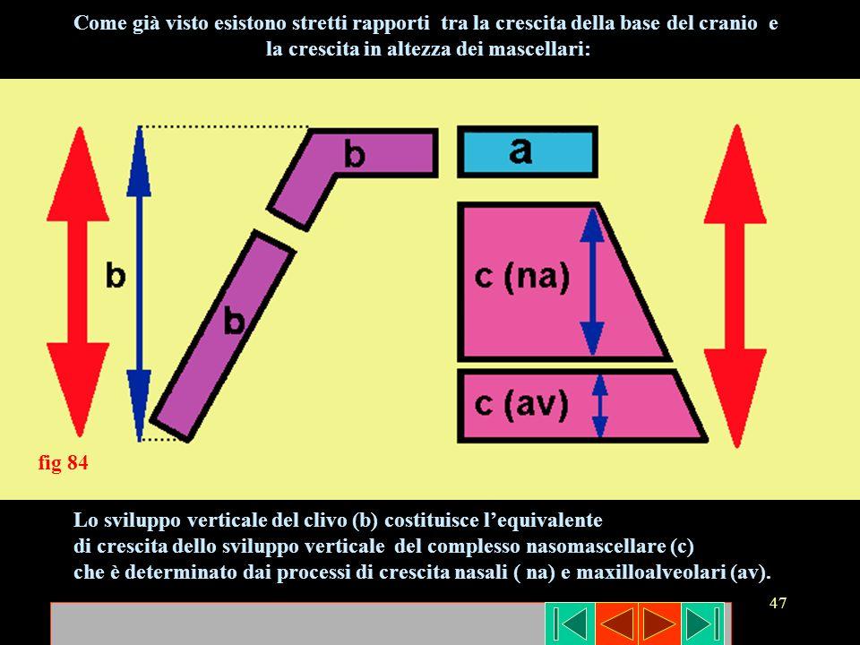 47 Lo sviluppo verticale del clivo (b) costituisce lequivalente di crescita dello sviluppo verticale del complesso nasomascellare (c) che è determinat
