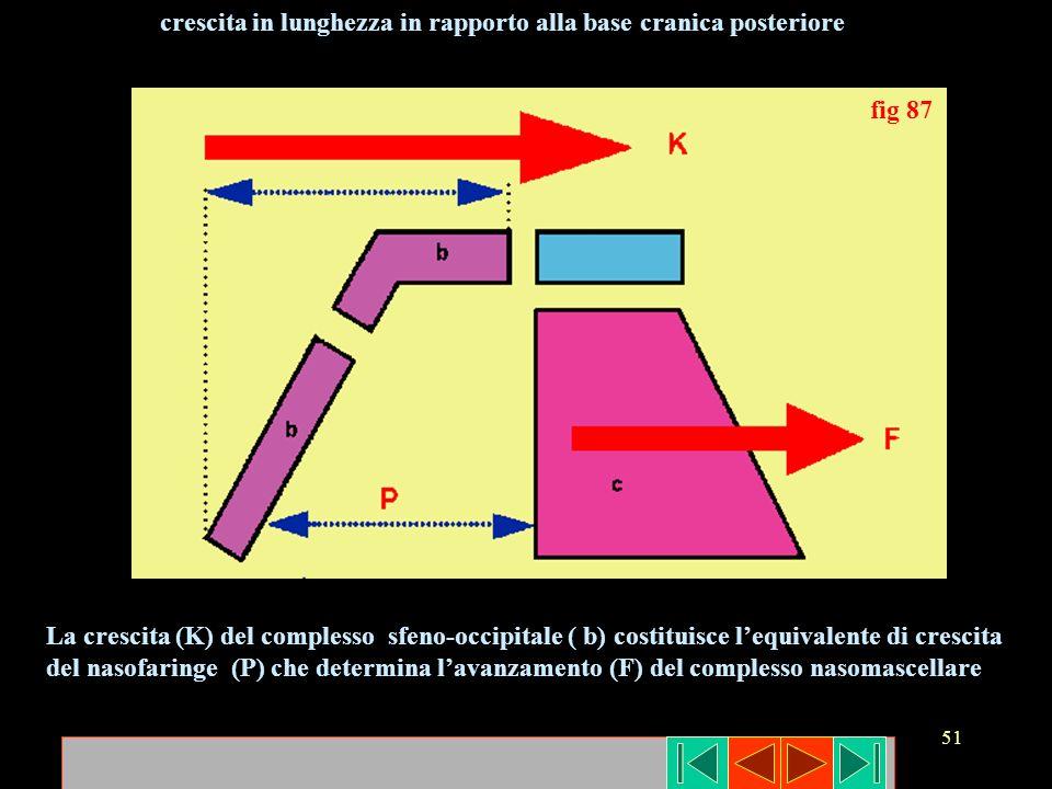 51 fig 87 La crescita (K) del complesso sfeno-occipitale ( b) costituisce lequivalente di crescita del nasofaringe (P) che determina lavanzamento (F)