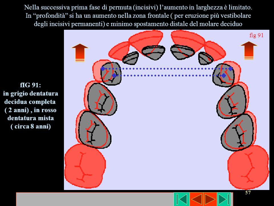 57 Nella successiva prima fase di permuta (incisivi) laumento in larghezza è limitato. In profondità si ha un aumento nella zona frontale ( per eruzio