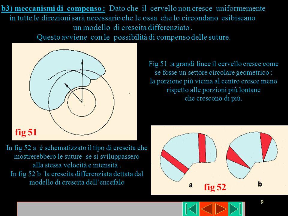 9 fig 52 fig 51 b3) meccanismi di compenso : Dato che il cervello non cresce uniformemente in tutte le direzioni sarà necessario che le ossa che lo ci