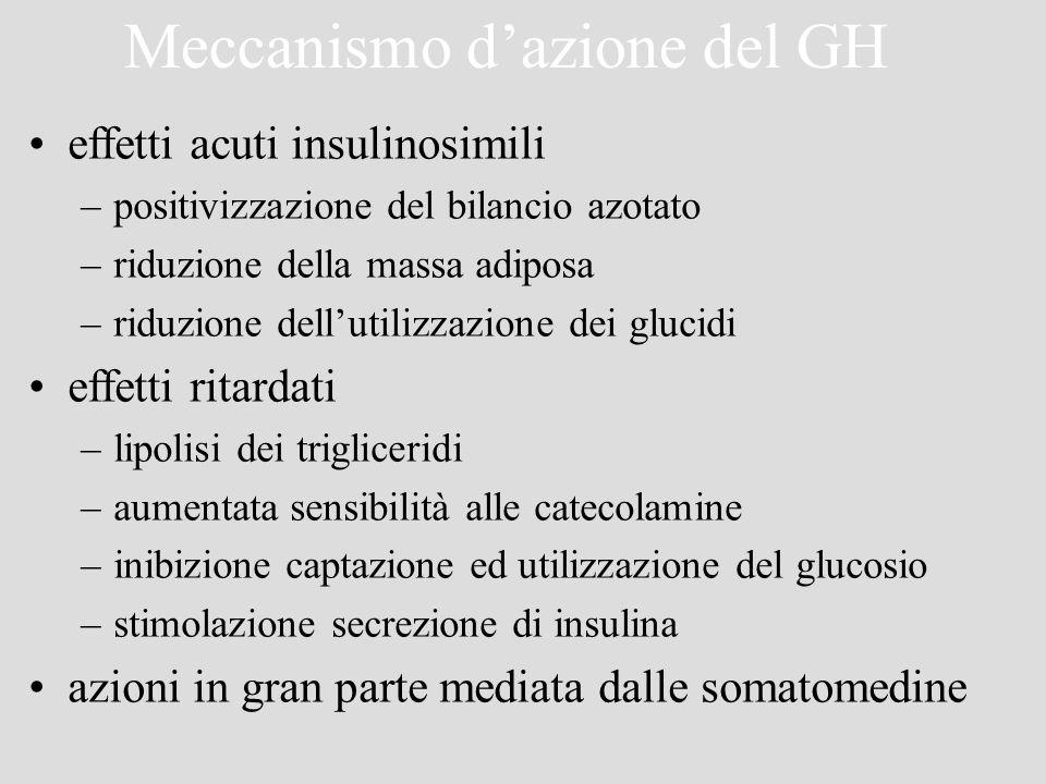 Meccanismo dazione del GH effetti acuti insulinosimili –positivizzazione del bilancio azotato –riduzione della massa adiposa –riduzione dellutilizzazi