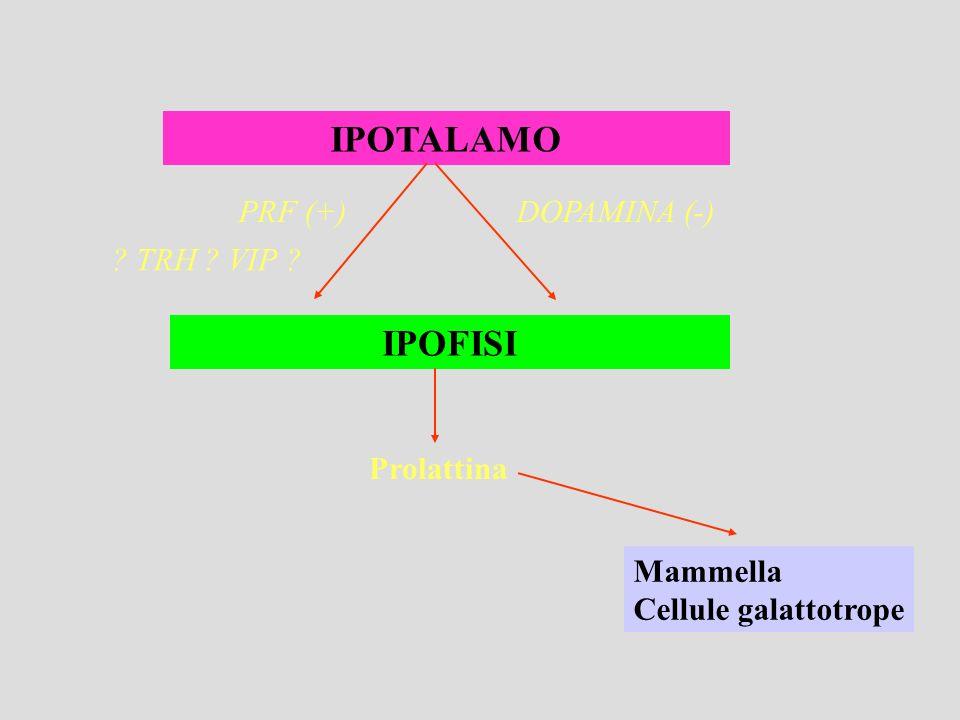 IPOTALAMO IPOFISI DOPAMINA (-)PRF (+) ? TRH ? VIP ? Prolattina Mammella Cellule galattotrope