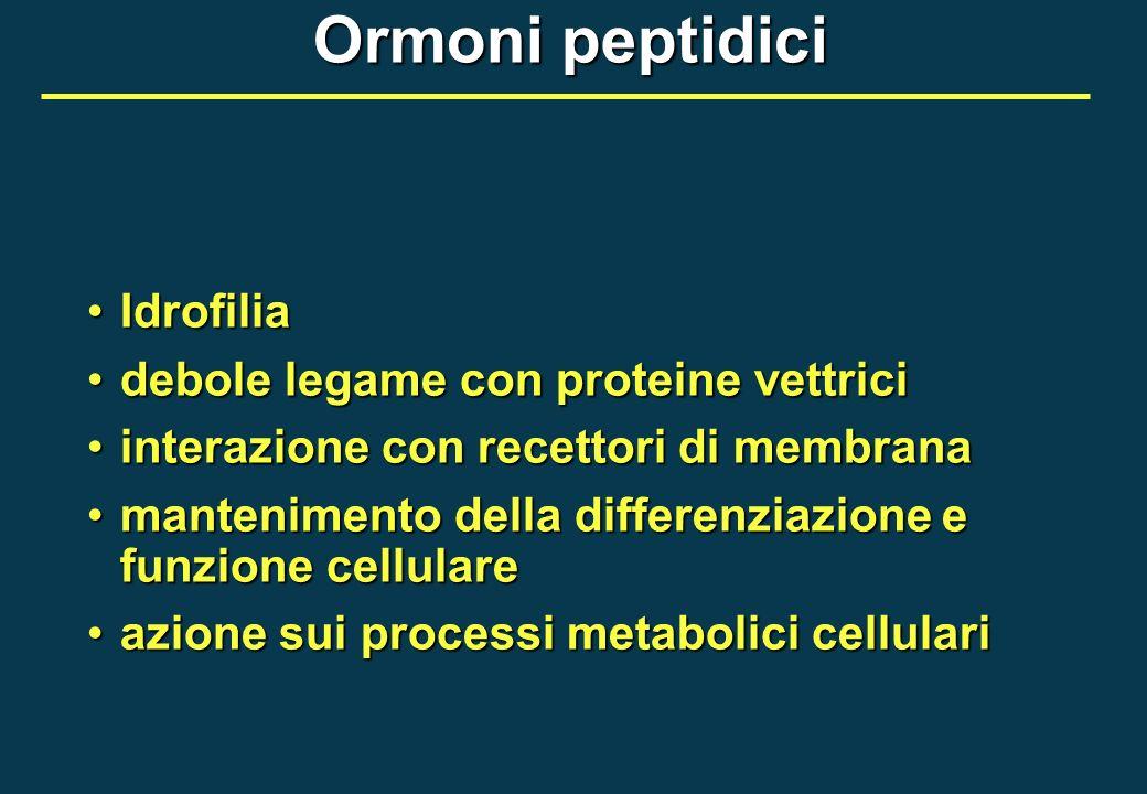 Ormoni peptidici IdrofiliaIdrofilia debole legame con proteine vettricidebole legame con proteine vettrici interazione con recettori di membranaintera