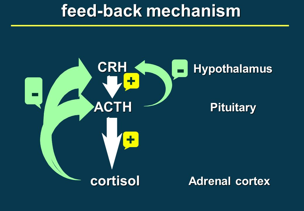 Adrenal cortex Pituitary Hypothalamus CRH ACTH cortisol feed-back mechanism + + - -
