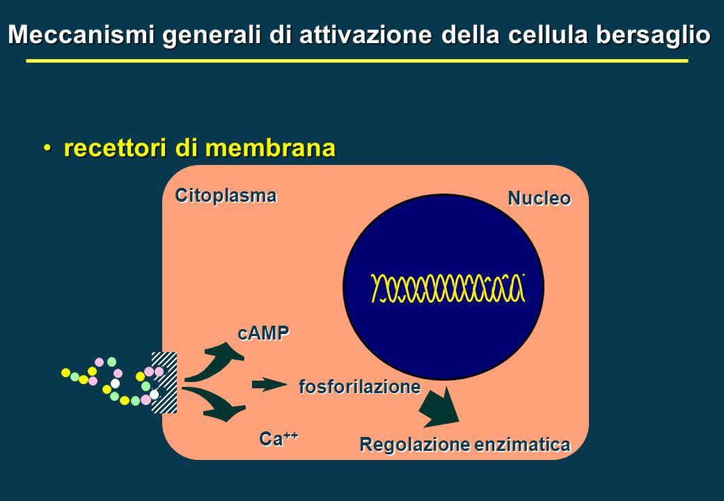 Meccanismi generali di attivazione della cellula bersaglio Citoplasma Nucleo recettori di membranarecettori di membrana cAMP Ca ++ fosforilazione Rego