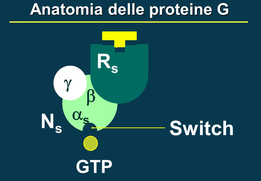 GTP NsNs RsRs s Switch Anatomia delle proteine G