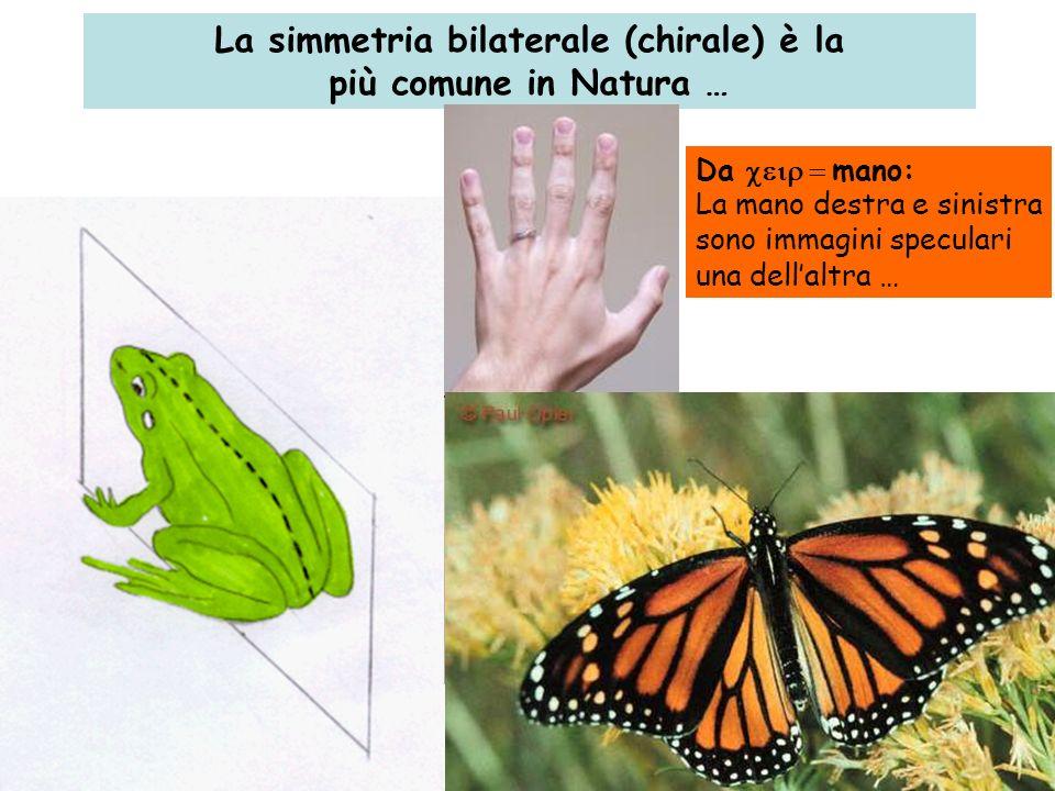 La simmetria bilaterale (chirale) è la più comune in Natura … Da mano: La mano destra e sinistra sono immagini speculari una dellaltra …