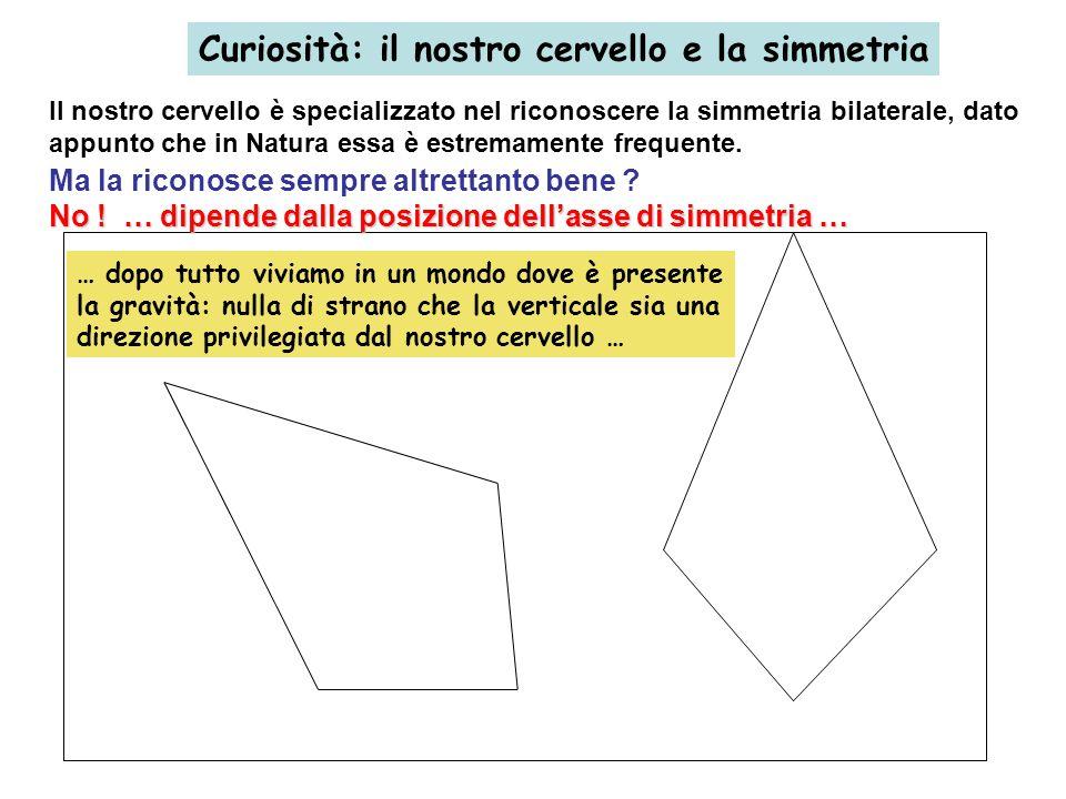 Curiosità: il nostro cervello e la simmetria Il nostro cervello è specializzato nel riconoscere la simmetria bilaterale, dato appunto che in Natura es