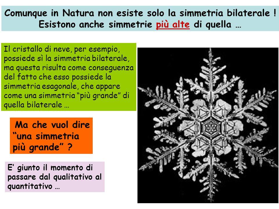 Comunque in Natura non esiste solo la simmetria bilaterale ! Esistono anche simmetrie più alte di quella … Il cristallo di neve, per esempio, possiede