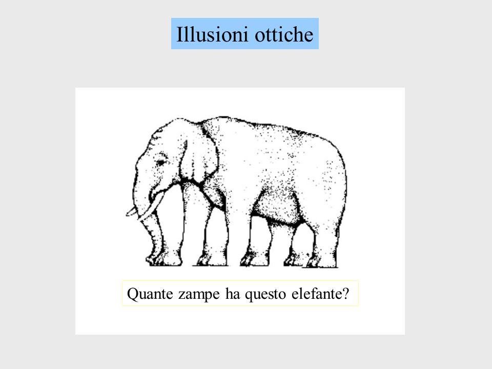 Quante zampe ha questo elefante?