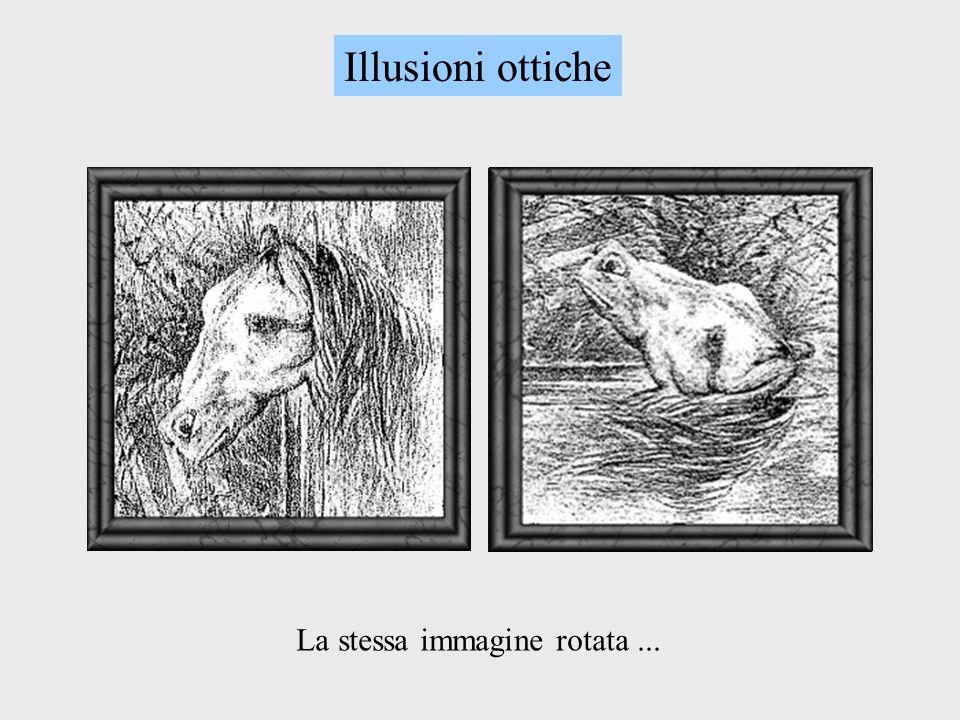La stessa immagine rotata... Illusioni ottiche