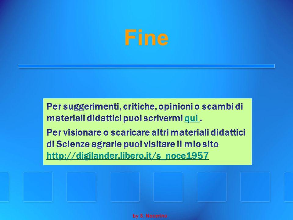 Fine by S. Nocerino
