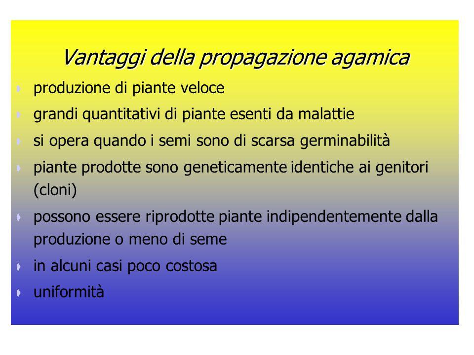 LA PROPAGAZIONE AGAMICA Alcuni sistemi di riproduzione agamica sfruttano esistenza naturale di organi vegetativi di riproduzione: bulbi, bulbilli, rizomi, stoloni, tuberi.