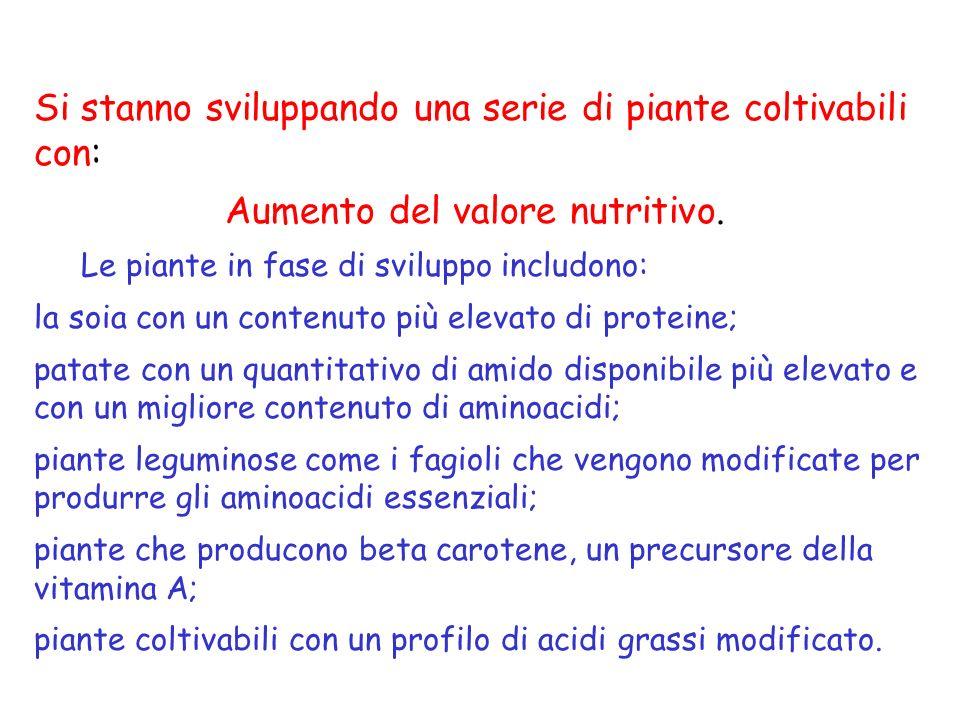 Si stanno sviluppando una serie di piante coltivabili con: Aumento del valore nutritivo.