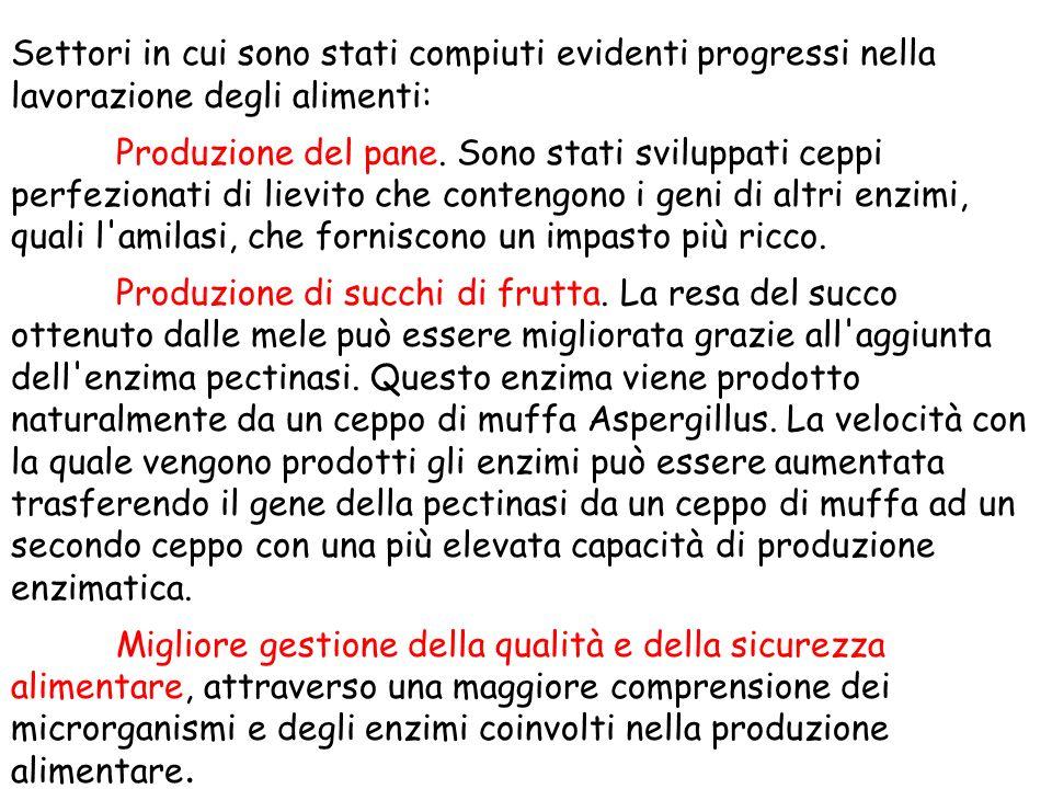 Settori in cui sono stati compiuti evidenti progressi nella lavorazione degli alimenti: Produzione del pane.