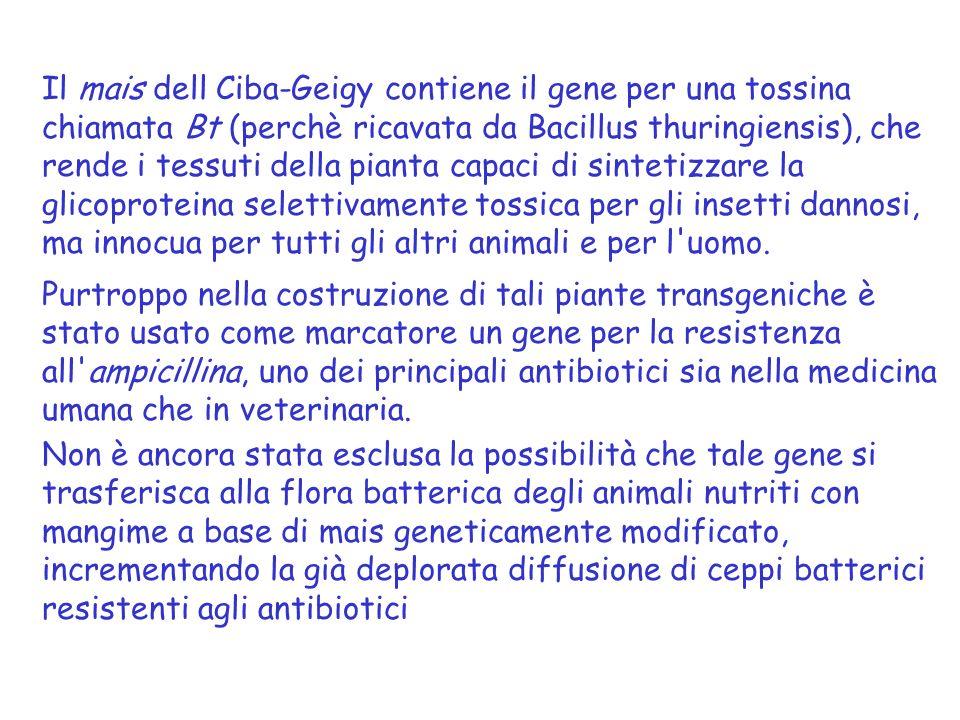 Il mais dell Ciba-Geigy contiene il gene per una tossina chiamata Bt (perchè ricavata da Bacillus thuringiensis), che rende i tessuti della pianta capaci di sintetizzare la glicoproteina selettivamente tossica per gli insetti dannosi, ma innocua per tutti gli altri animali e per l uomo.