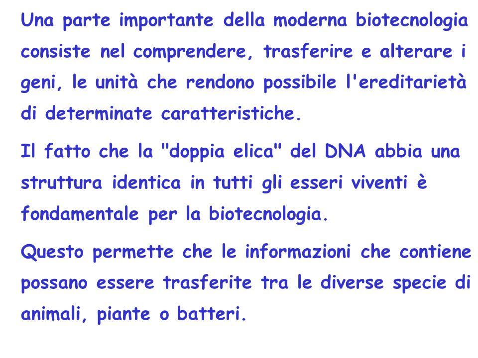 I metodi utilizzati per manipolare geneticamente le piante sono due: AGROBACTERIUM e BOMBARDAMENTO