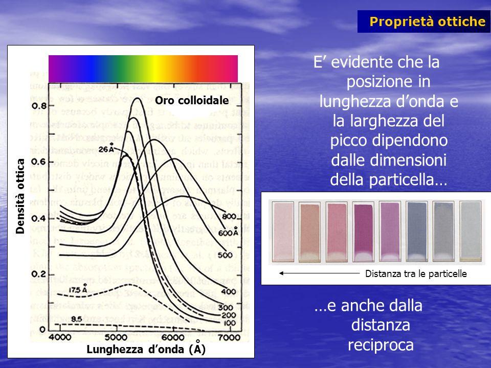 Proprietà ottiche Distanza tra le particelle Densità ottica Lunghezza donda (A) Oro colloidale ° E evidente che la posizione in lunghezza donda e la l