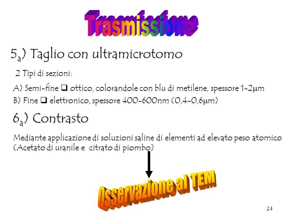 24 5 a ) Taglio con ultramicrotomo 2 Tipi di sezioni: A) Semi-fine ottico, colorandole con blu di metilene, spessore 1-2 m B) Fine elettronico, spessore 400-600nm (0,4-0,6 m) 6 a ) Contrasto Mediante applicazione di soluzioni saline di elementi ad elevato peso atomico (Acetato di uranile e citrato di piombo)