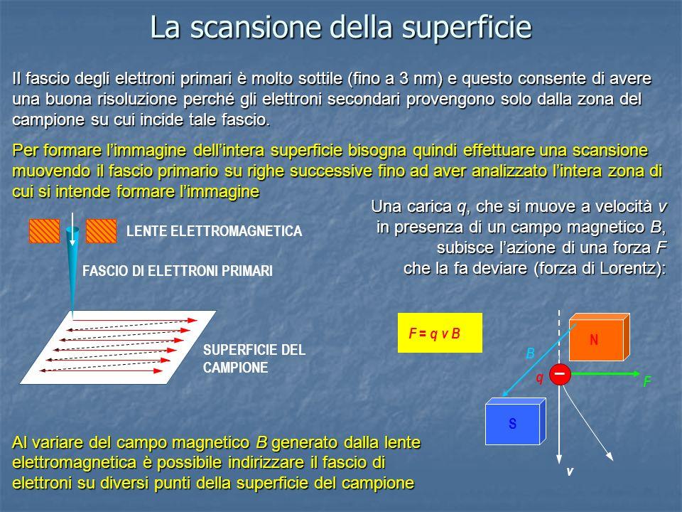 La scansione della superficie Il fascio degli elettroni primari è molto sottile (fino a 3 nm) e questo consente di avere una buona risoluzione perché