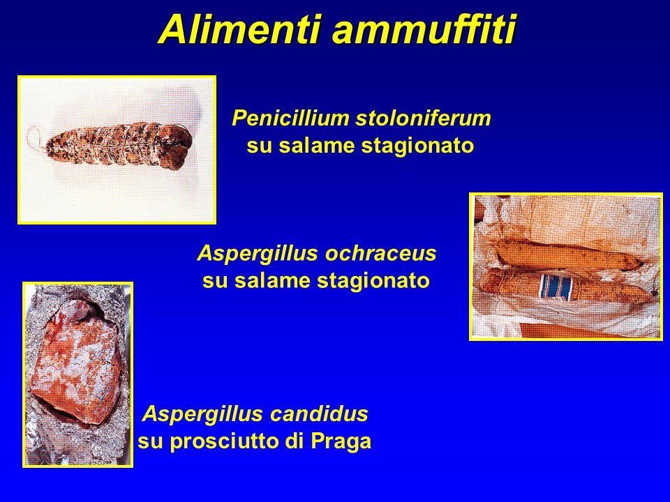Penicillium stoloniferum su salame stagionato Aspergillus ochraceus su salame stagionato Aspergillus candidus su prosciutto di Praga Alimenti ammuffit