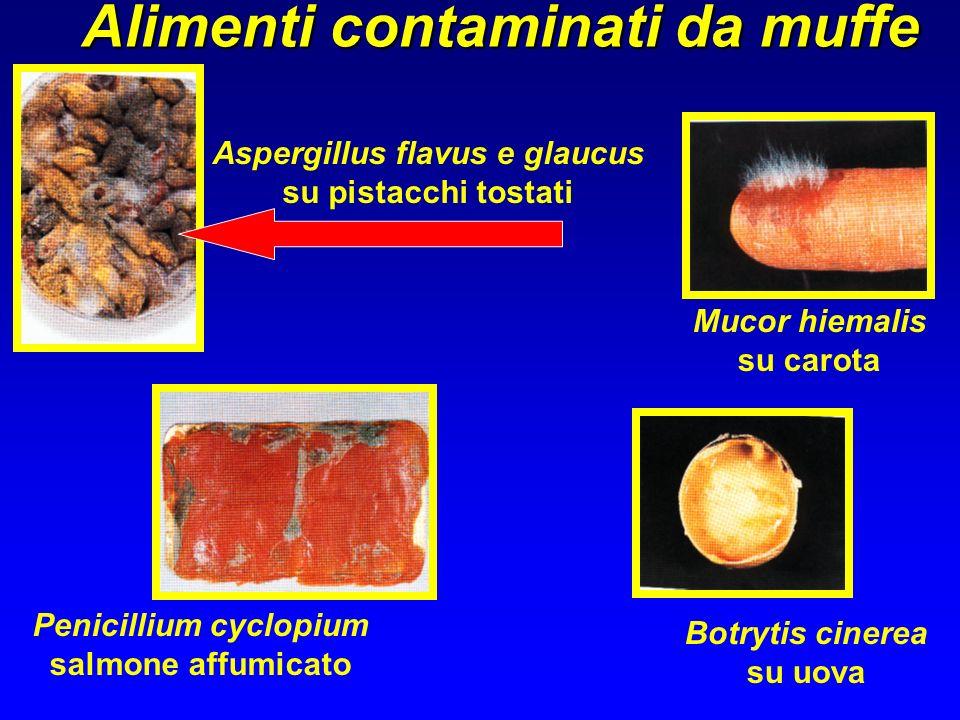 Penicillium cyclopium salmone affumicato Mucor hiemalis su carota Aspergillus flavus e glaucus su pistacchi tostati Alimenti contaminati da muffe Botr